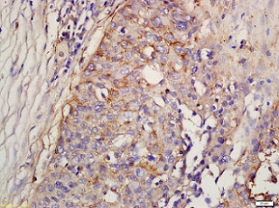 Immunohistochemistry (Formalin/PFA-fixed paraffin-embedded sections) - Anti-Factor D/CFD antibody (ab213682)