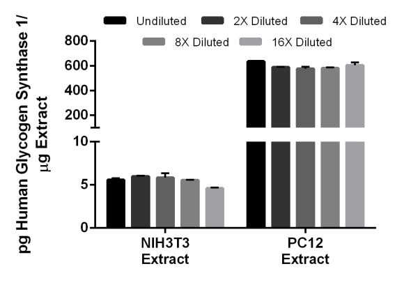 Interpolated concentrations of native Glycogen Synthase 1 in mouse NIH3T3 extract and rat PC12 extract.