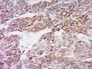Immunohistochemistry (Formalin/PFA-fixed paraffin-embedded sections) - Anti-IDO-2 antibody (ab214214)