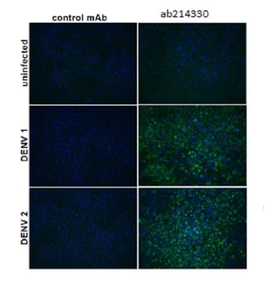 Immunocytochemistry/ Immunofluorescence - Anti-Flavivirus E-glycoprotein antibody [HF5-3/D5-3/B10-2] (ab214330)