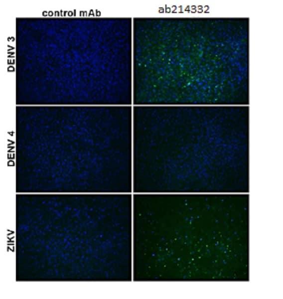 Immunocytochemistry/ Immunofluorescence - Anti-Flavivirus E-glycoprotein antibody [DM4/4/D6/5] (ab214332)