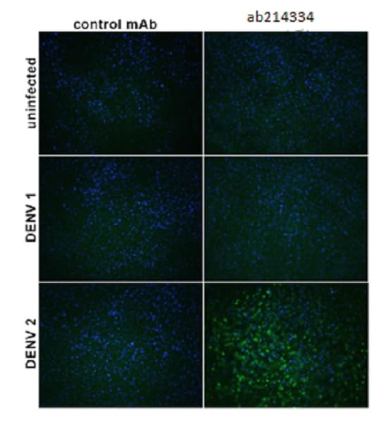 Immunocytochemistry/ Immunofluorescence - Anti-Flavivirus E-glycoprotein antibody [HF8-4/C6-6/A9] (ab214334)