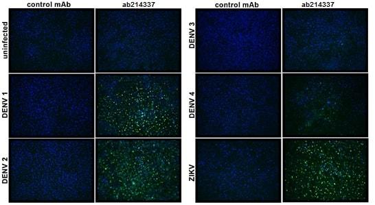 Immunocytochemistry/ Immunofluorescence - Anti-Flavivirus NS1 antibody [D/2/D6/B7] (ab214337)