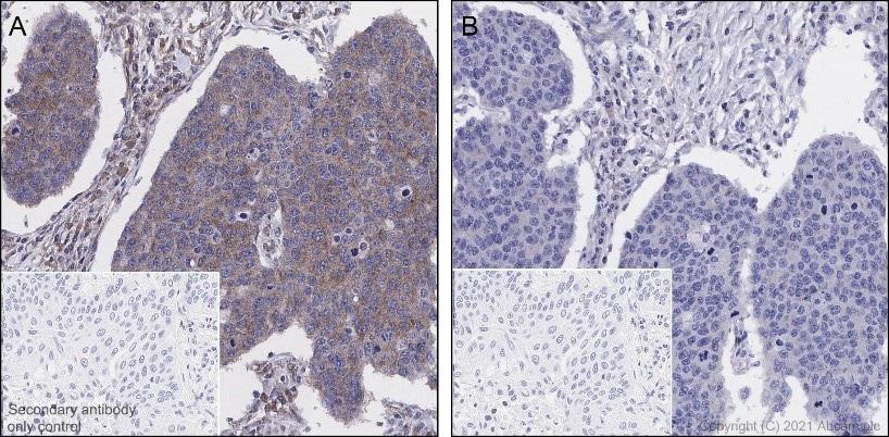 Immunohistochemistry (Formalin/PFA-fixed paraffin-embedded sections) - Anti-EIF2S1 (phospho S51) antibody [E90] - BSA and Azide free (ab214434)