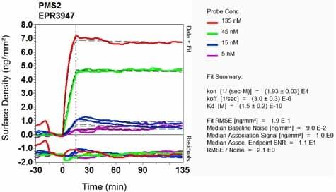 OI-RD Scanning - Anti-PMS2 antibody [EPR3947] - BSA and Azide free (ab214442)