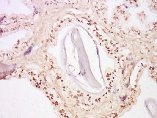 Immunohistochemistry (Formalin/PFA-fixed paraffin-embedded sections) - Anti-FOXA2 antibody (ab214449)