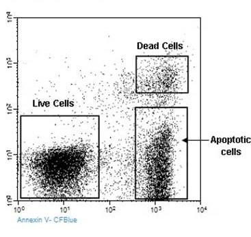 Annexin V-CF Blue  PI Apoptosis Detection Kit