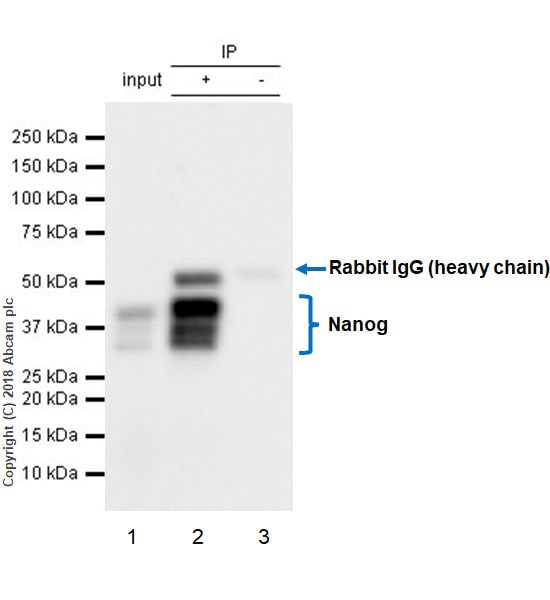 Immunoprecipitation - Anti-Nanog antibody [EPR20694] - ChIP Grade (ab214549)