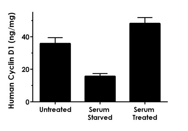 Comparison of Cyclin D1 concentrations in untreated MCF-7, serum starved MCF-7, and serum rescued MCF-7 cell extracts.