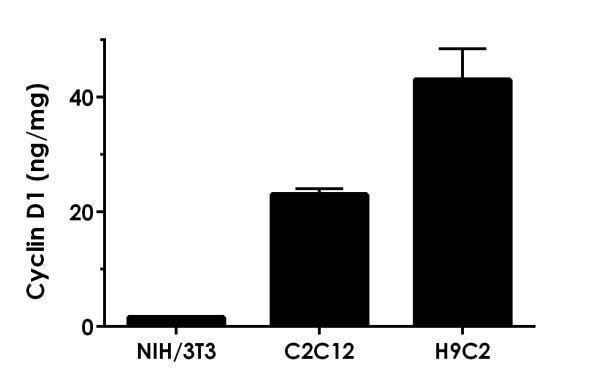 Interpolated concentrations of native Cyclin D1 in mouse NIH/3T3, mouse C2C12 and rat H9C2 cell extracts.