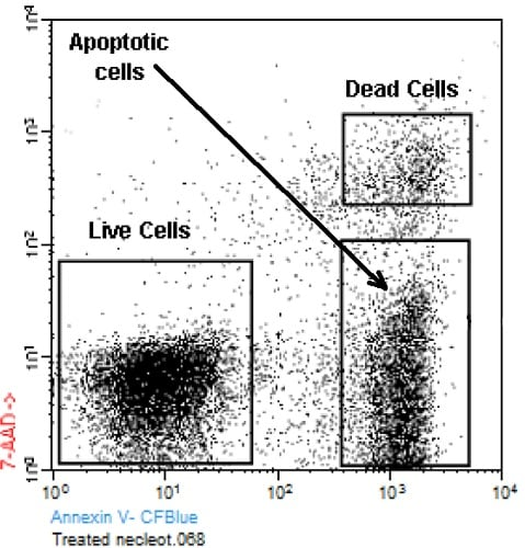 Abcam's Apoptosis Detection (Annexin V-CF Blue 7-AAD) Kit Jurkat cells (T-cell leukemia, human) treated with 6 µM camptothecin for four hours.