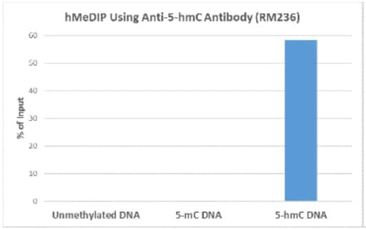 MeDIP - Anti-5-hydroxymethylcytosine (5-hmC) antibody [RM236] (ab214728)