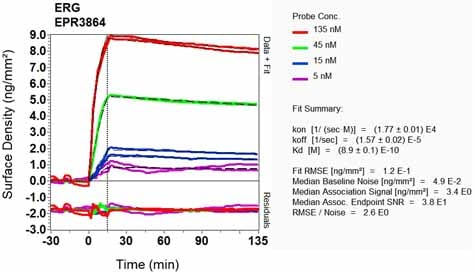 Other - Anti-ERG antibody [EPR3864] - BSA and Azide free (ab214796)