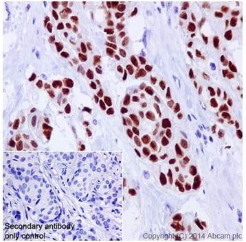 Immunohistochemistry (Formalin/PFA-fixed paraffin-embedded sections) - Anti-GATA3 antibody [EPR16651] - BSA and Azide free (ab214804)