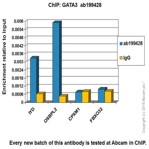 ChIP - Anti-GATA3 antibody [EPR16651] - BSA and Azide free (ab214804)