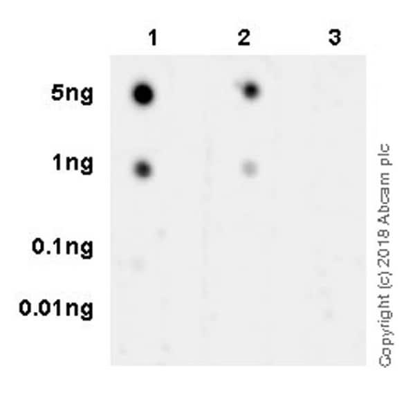 Dot Blot - Anti-TIFA (phospho T9) antibody [EPR19853] (ab214815)