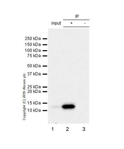 Immunoprecipitation - Anti-MCP1 antibody [EPR21025] (ab214819)
