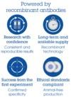 Sandwich ELISA - Human PCSK9 Matched Antibody Pair Kit (ab215081)