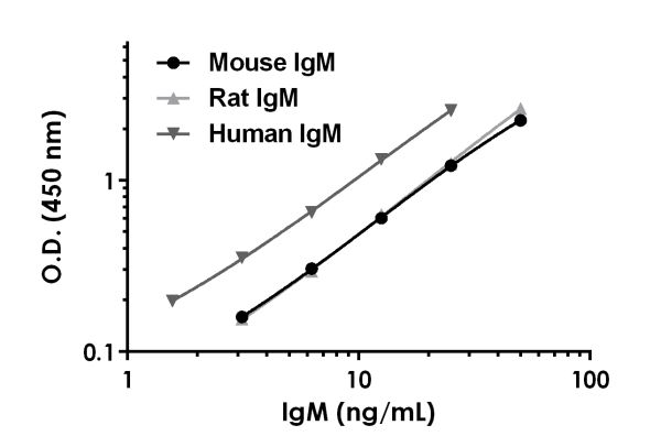 A comparison of mouse, rat, and human IgM proteins is shown.