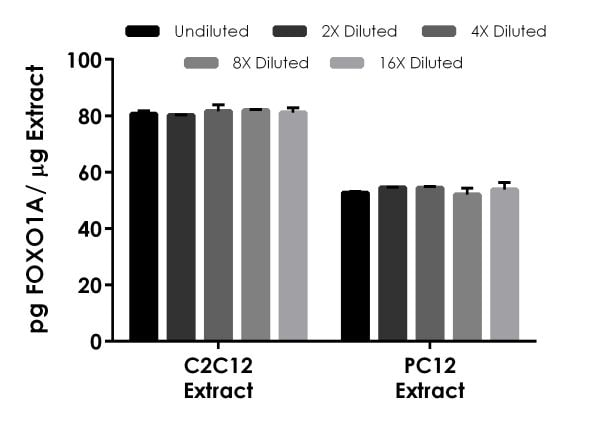 Interpolated concentrations of native FOXO1A in mouse C2C12 extract, and rat PC12 extract.