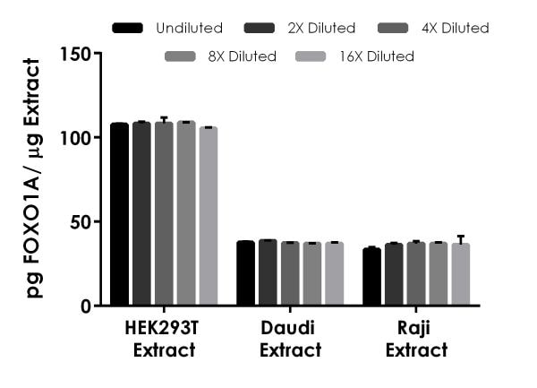 Interpolated concentrations of native FOXO1A in human HEK293T, Daudi and Raji cell extract samples.