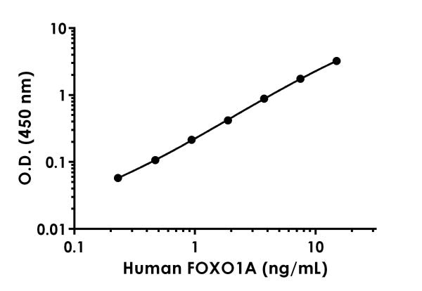 Example of human FOXO1A standard curve.