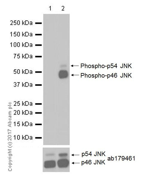 Western blot - Anti-JNK1 (phospho T183 + Y185) antibody [EPR20763] (ab215208)