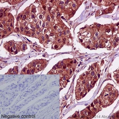 Immunohistochemistry (Formalin/PFA-fixed paraffin-embedded sections) - Anti-PRMT5 antibody [EPR5772] - BSA and Azide free (ab215364)