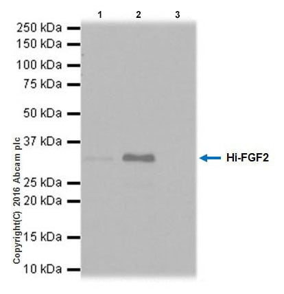 Immunoprecipitation - Anti-FGF2 antibody [EPR20145-227] (ab215373)