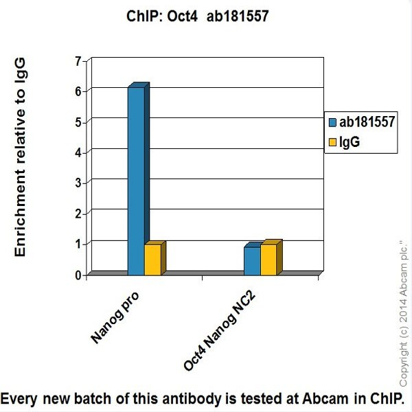 ChIP - Anti-Oct4 antibody [EPR17929] - Low endotoxin, Azide free (ab215386)