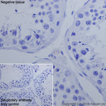 Immunohistochemistry (Formalin/PFA-fixed paraffin-embedded sections) - Anti-Oct4 antibody [EPR17929] - Low endotoxin, Azide free (ab215386)