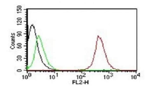 Flow Cytometry - Anti-CD63 antibody [NKI/C3] - Late Endosome Marker (Phycoerythrin) (ab215431)