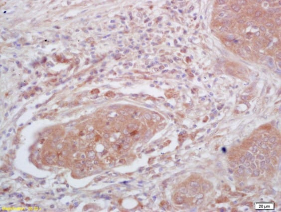 Immunohistochemistry (Formalin/PFA-fixed paraffin-embedded sections) - Anti-Tspan-9 antibody (ab215432)