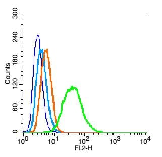 Flow Cytometry - Anti-p27 KIP 1 antibody (ab215434)