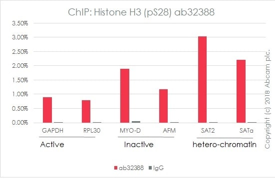 ChIP - Anti-Histone H3 (phospho S28) antibody [E191] - BSA and Azide free (ab215532)