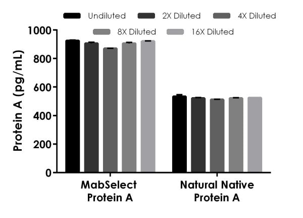 MabSelect Protein A and natural native Protein A were measured in duplicate and interpolated from the recombinant Protein A standard curve and corrected for sample dilution.
