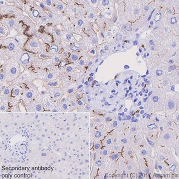 Immunohistochemistry (Formalin/PFA-fixed paraffin-embedded sections) - Anti-DPP4 antibody [EPR20819] (ab215711)