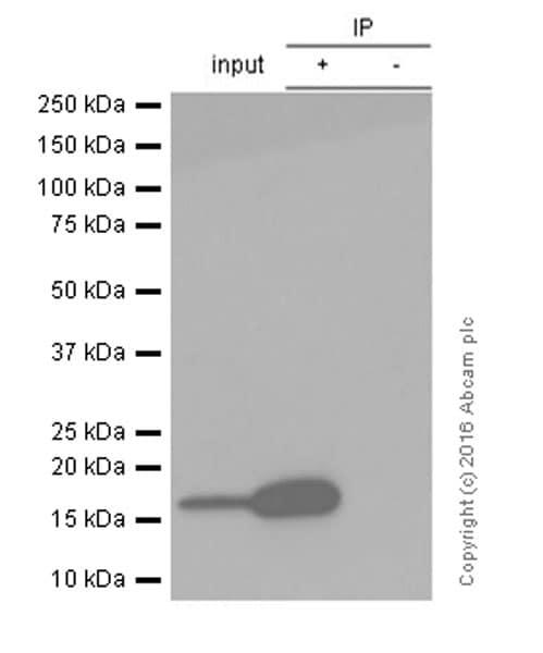 Immunoprecipitation - Anti-gamma H2A.X (phospho S139) antibody [EP854(2)Y] - BSA and Azide free (ab215967)