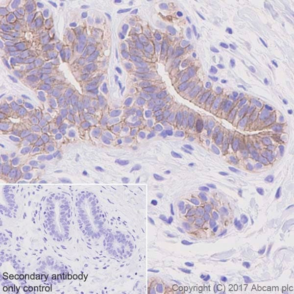 Immunohistochemistry (Formalin/PFA-fixed paraffin-embedded sections) - Anti-Occludin antibody [EPR20992] (ab216327)