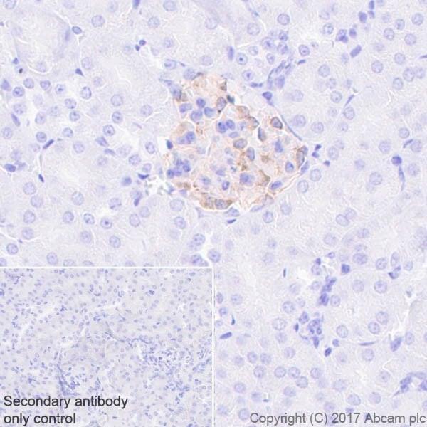 Immunohistochemistry (Formalin/PFA-fixed paraffin-embedded sections) - Anti-Nephrin antibody [EPR20993] (ab216341)
