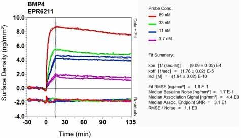 Other - Anti-BMP4 antibody [EPR6211] - Low endotoxin, Azide free (ab216455)