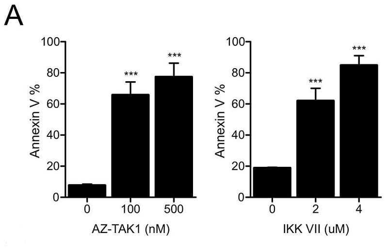 Functional Studies - IKK-16, IkappaB kinase inhibitor (ab216471)