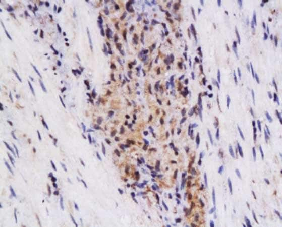 Immunohistochemistry (Formalin/PFA-fixed paraffin-embedded sections) - Anti-SynCAM/CADM1 antibody (ab216585)