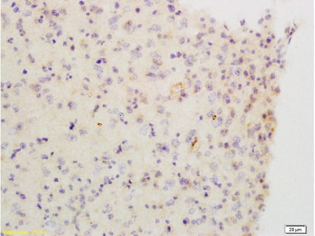 Immunohistochemistry (Formalin/PFA-fixed paraffin-embedded sections) - Anti-Muscarinic Acetylcholine Receptor 2/CM2 antibody (ab216641)