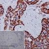 Immunohistochemistry (Formalin/PFA-fixed paraffin-embedded sections) - Anti-CD44 antibody [EPR1013Y] - BSA and Azide free (ab216647)
