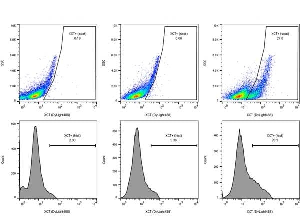 Flow Cytometry - Anti-xCT antibody (ab216876)