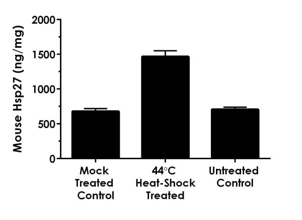 Interpolated concentrations of native Hsp27 in mouse C2C12 mock-treated, heat-shocked, and untreated cell extracts based on a 1,000 µg/mL extract load.