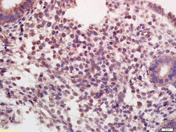 Immunohistochemistry (Formalin/PFA-fixed paraffin-embedded sections) - Anti-Oxytocin Receptor antibody (ab217212)