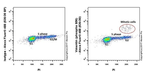 Flow Cytometry - Anti-Vimentin (phospho S56) antibody [EPR21084] (ab217673)
