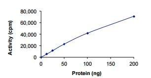 Functional Studies - Recombinant human MAPK6/ERK-3 protein (ab217835)